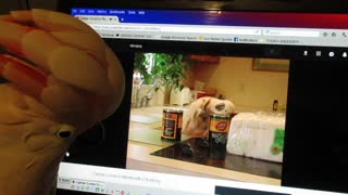 Cockatoo Taps Along to Video of Herself