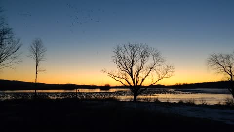 Sunrise and Snow Geese