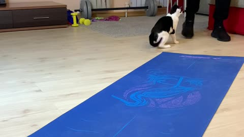 Kitty Interrupts Owners Work Out