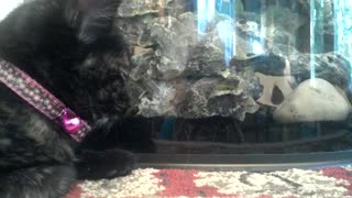 Fish playing Hide and Seek with sleepy kitten