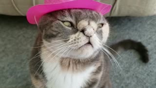 Trendy cat shows off new cowboy hat