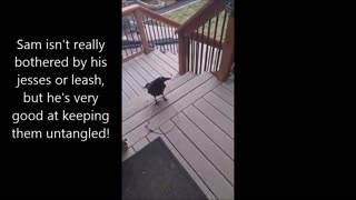 Sam Talks About Crows