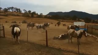 This Is What Horses Do When Having Fun - Video