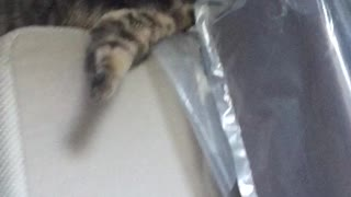 Sweet kitten gets stuck! - Video