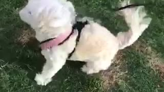 Dog standing in strong winds