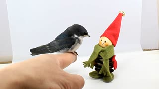 A little bird that accepts a toy doll