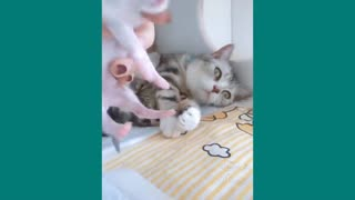 Funny Cats ✪ Mother cats protecting their cute kittens #81