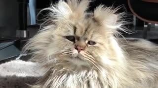 how your cat look like after wake up - Video