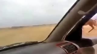 How to catch a camel in desert where camel run very fast  - Video