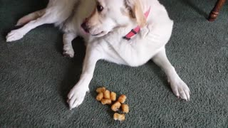 Tater Eating Dog - Video