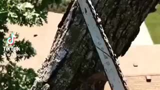 Tree removal with Justin Rieke