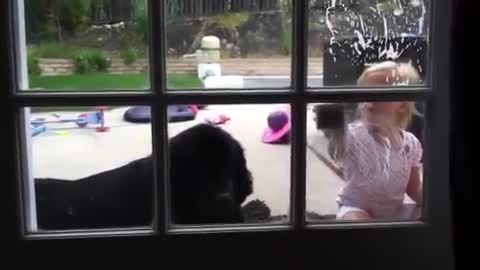 Toddler cleans up after slobbery Newfoundland puppy