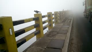 A crow felling cold in smog in cold weather