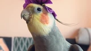 A little outtake from Crumpet's stint as a flower-boi