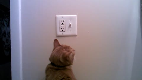 Cat determined to save electric energy