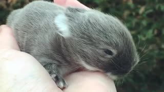 Tiny baby bunny rabbit is a cuteness overload! - Video