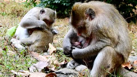 Mother taking care her baby very well he will grow up very fast so cute monkey