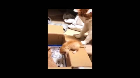 cat is playing with his kid