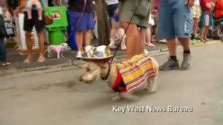 Dog parade rings in New Year - Video
