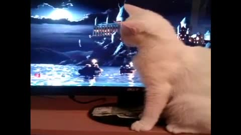 Silly gaming cat No2