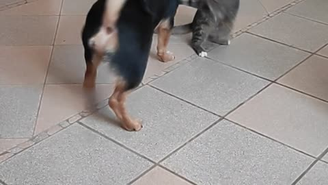 Puppy and kitten are very cute playing with each other.