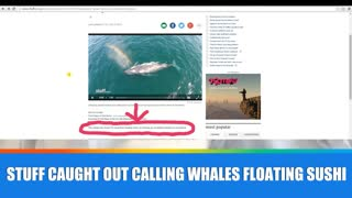 Fairfax NZ or Stuff.co.nz calls Whales 'floating sushi' - Video