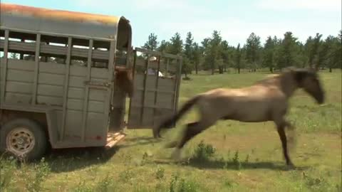 An Old Cowboy Calls For His Horses… Watch How They React!!