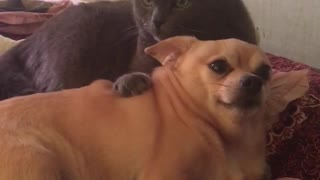 The cat almost killed the dog!  - Video