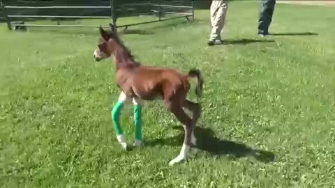 Horse Gives Birth To Miracle Twin Foals