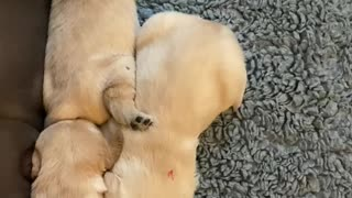 Lets huge each other puppy's