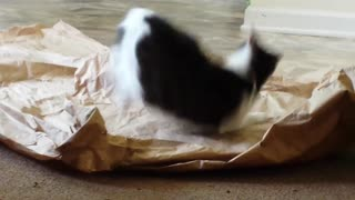 Funny cat attacks packing paper - Video