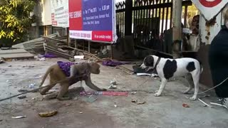 Monkey vs Dog Friendly Fight