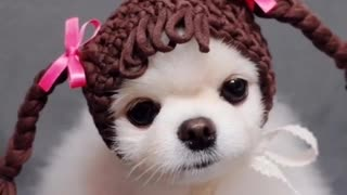 Look How Funny This Small Dog Looks