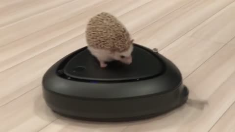 A hedgehog eats and takin the game and goes