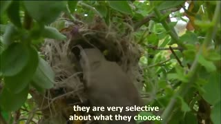 Amazing Animal Homes,how animals live,Nature Documentary