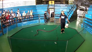 Snake Show, Thailand - Video