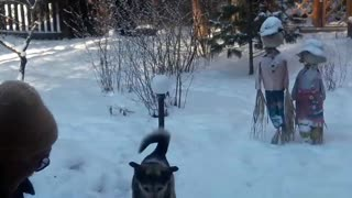 Dog Has a Showdown with the Shovel