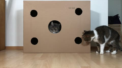 Cats engage in epic fight over new cardboard box dominance
