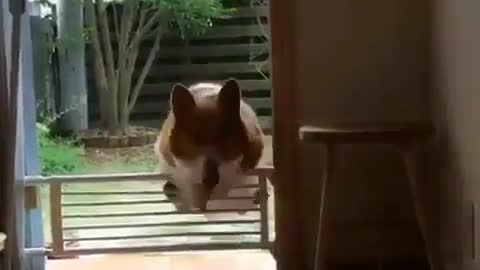 I turn, I turn! I want to go in! The action of this dog is so happy