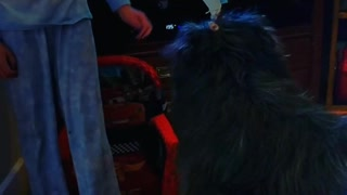 Little girls put blue hairband with treat on dog - Video