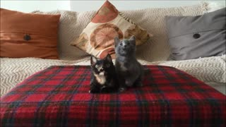 Kittens adorably bob their heads to the music
