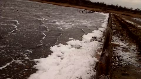 Winter foam on the shore