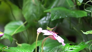 Insect searching for nectar in beautiful flower, nature captures high-quality 4k/30fps  - Video