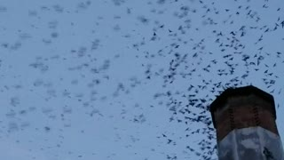 Portland Swift Watch 2017 - Video