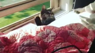 Collab copyright protection - cat stuck between window and bed