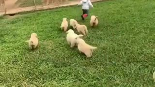 Adorable baby playing with puppies