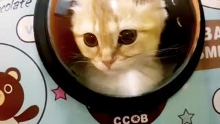 Cat going to space - Video