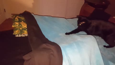 2 Black Cats play in bed fort