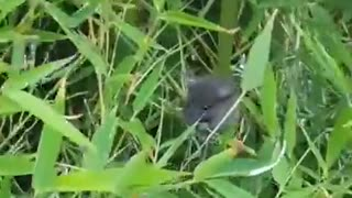 Cute little mouse eating bamboo