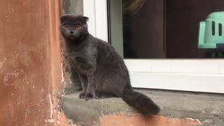 funny cat on the window